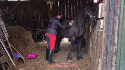 Preparation for training with my frisian horse